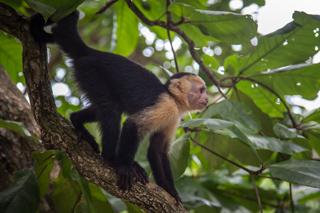 Manuel Anotnio, Costa Rica