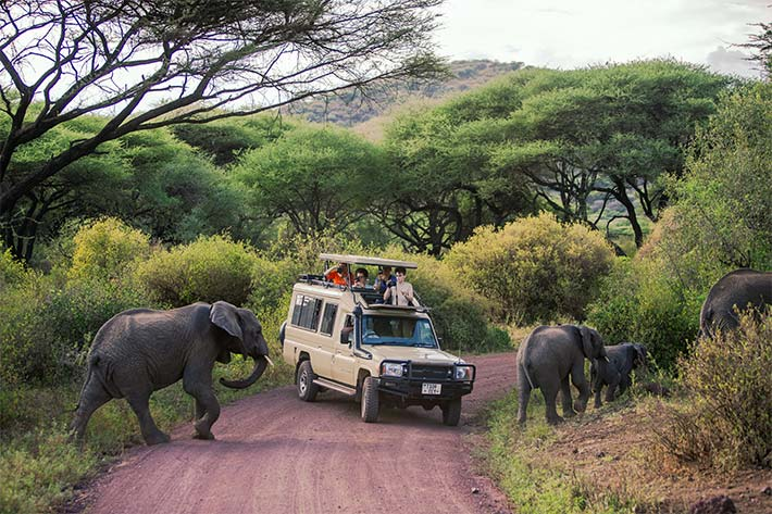 Safari tour surrounded by Elephants